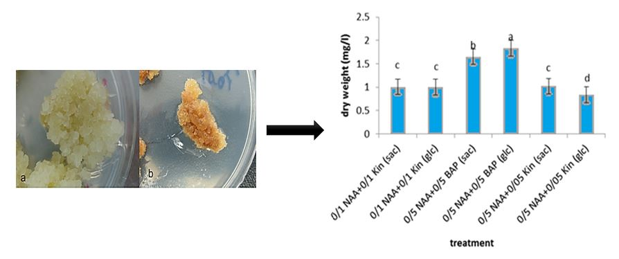 The effects of chitosan nanoparticles on genes expression of artemisinin synthase in suspension culture of Artemisia annua L: A comparative study