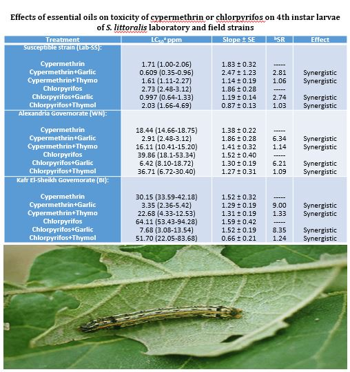 Synergistic Efficacy of Plant Essential Oils with Cypermethrin and Chlorpyrifos Against Spodoptera littoralis, Field Populations in Egypt